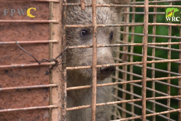 Bear Rescue - Dilijan 2019 with LOGO.mp4_snapshot_00.56_[2019.08.12_18.27.46]